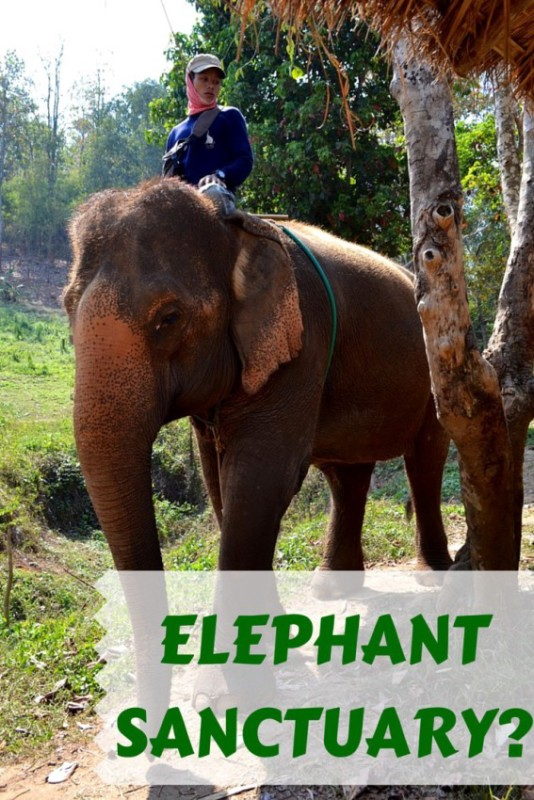 Is it really an elephant sanctuary?