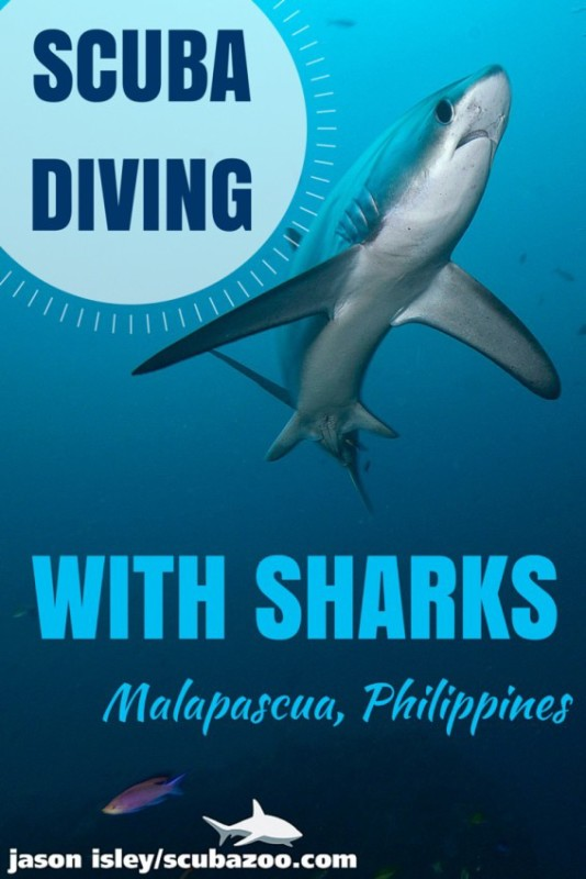 Dive with thresher sharks in Malapascua
