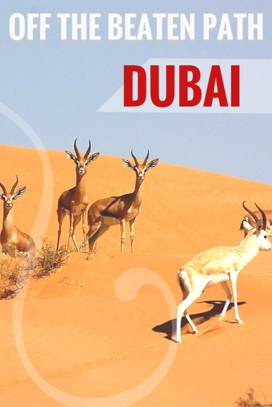 Get out of the city and explore off the beaten path Dubai