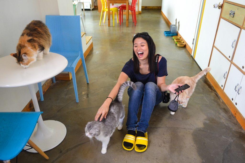 Cat cafe Seoul