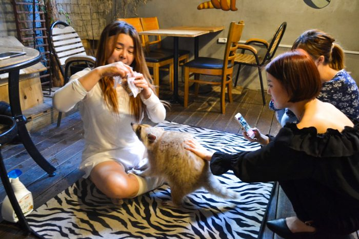 raccoon cafe Seoul