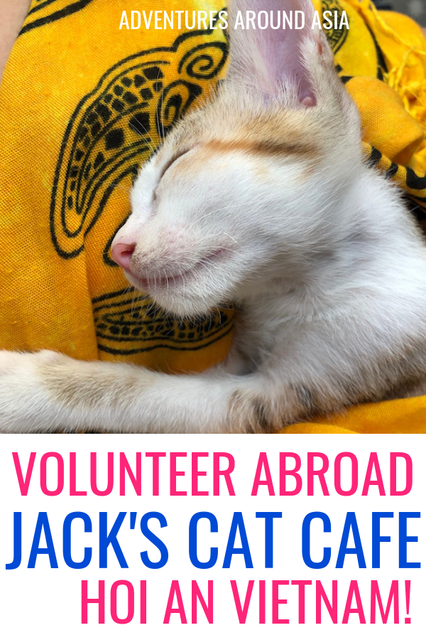 Do you want to volunteer with animals abroad? Heres how you can make a difference in Hoi An Vietnam by volunteering with cats and kittens! #volunteer #travel #vietnam #cat #kittens #hoian